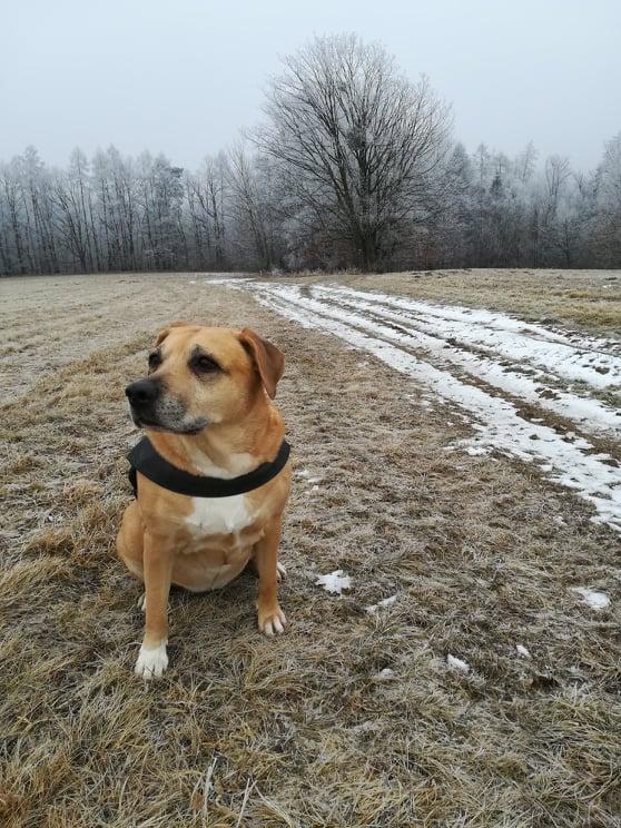 Podporujeme Ligu na ochranu zvířat ČR – místní organizaci Olomouc