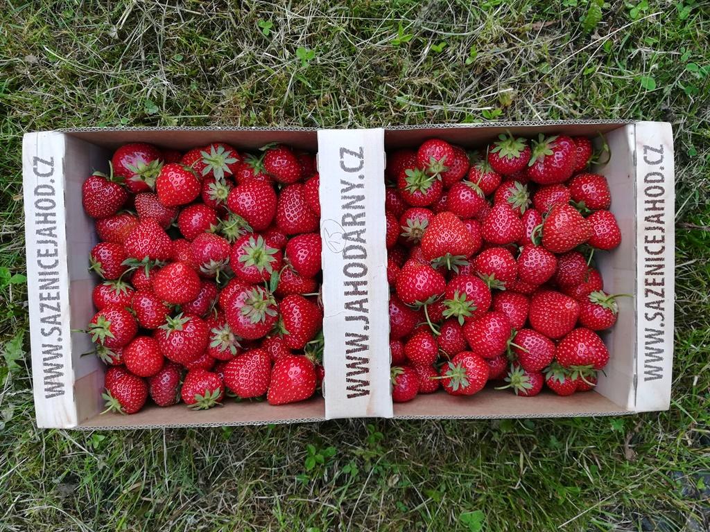 Samosběr jahod - Co si obléct na pole?