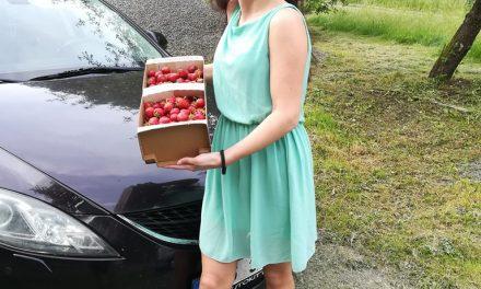 Samosběr jahod – Co si obléct na pole?