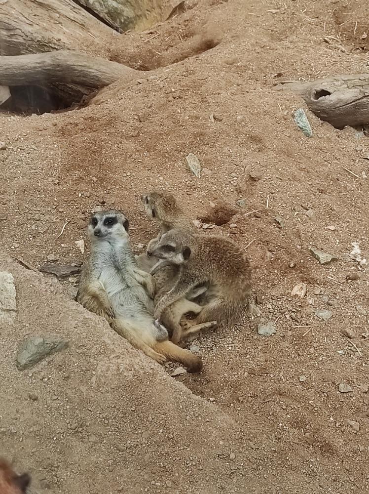 Navštivte zoo (zoologickou zahradu) na podzim